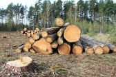 Deforestation — Stock Photo