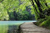 Wooden path near a forest lake — Stock Photo