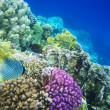 Underwater life of hard-coral reef, Red Sea, Egypt — Stock Photo #6967215