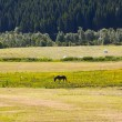 Stock Photo: Rural lanscape with horse