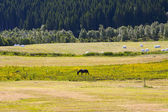 Rural lanscape with horse — Stock Photo