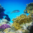 Underwater life of hard-coral reef — Stock Photo #7403536