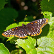 Butterfly on Green leaf in the sunshine... — Stock Photo