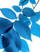 Blue leaf — Stock Photo