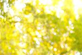 Follaje de otoño — Foto de Stock