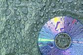 DVD disk — Stockfoto