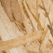 Texture wood — Stock Photo