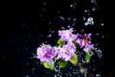 Flower with water — Stock Photo
