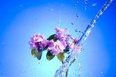 Blossom pink flower — Stock Photo