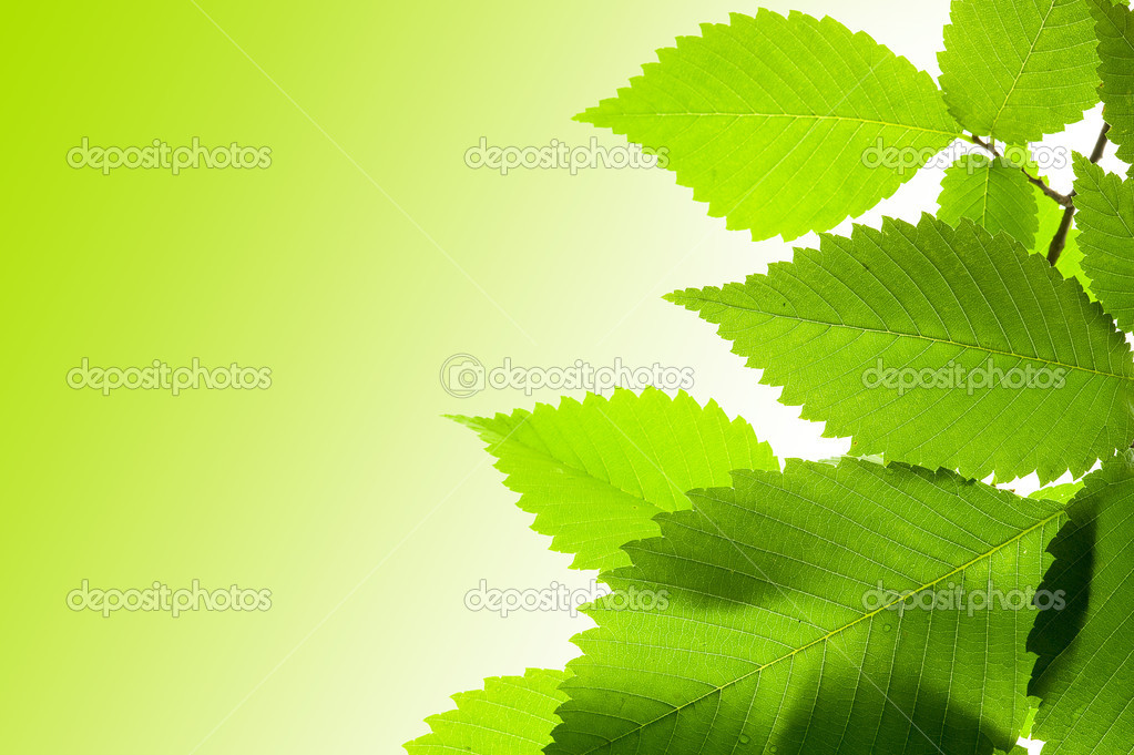 Background with green fresh folige  Stock Photo #7265551