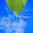 Water and leaf - Lizenzfreies Foto