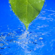 Water and leaf — Stock Photo