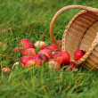 Apple basket — Stock Photo #7164565
