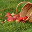 Stock Photo: Apple basket