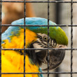 Stock Photo: Caged parrot