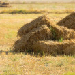 Pile of straw — Foto de stock #7200124