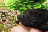 Peixes de aquário bonito — Fotografia Stock