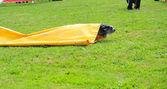 Brie çoban köpeği çeviklik yarışma — Stok fotoğraf