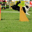 Border collie in Agility competition — Stock Photo #7603848