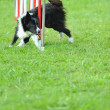 Border collie in Agility competition — Stock Photo #7603850