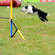 Border collie in Agility competition — Stock Photo #7701766