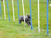 Knírač závodí — Stock fotografie