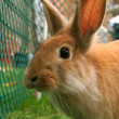 Rabbit — Stock Photo #7247982