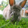 Rabbit — Stock Photo #7248001