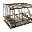 Empty cage — Stock Photo