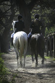 Ryttare och häst — Stockfoto