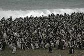 Penguins, — Stock Photo