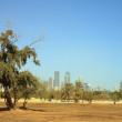 Greening Qatar — Stock Photo