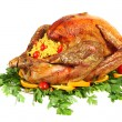 Festive turkey side view isolated — Photo