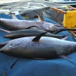 Stock Photo: Tunand swordfish in Crete