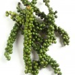 Green peppercorns vertical — Stock Photo