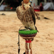 Falcon at an Arabian camp - Stock Photo