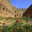 Poppies in castle ruins - Stock Photo