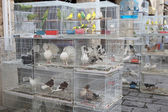 Caged birds in pet market — Stock Photo