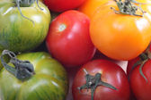 Tomato varieties red green and yellow — Stock Photo