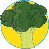 Broccoli Graphic — Stock Vector