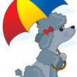 Poodle in Rain — Stock Vector