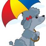 Постер, плакат: Poodle in Rain
