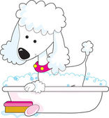Poodle Bath — Stock Vector