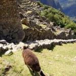 Machu Picchu — Stock Photo #7105290