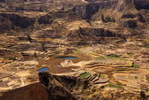 Fields in Colca canion, Peru — Stock Photo