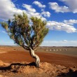 Tree, Gobi desert, Mongolia - Stock Photo