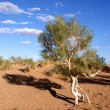 Tree, Gobi desert, Mongolia — Stock Photo