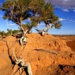 Tree, Gobi desert, Mongolia — Stock Photo #7140333