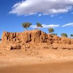 Tree, Gobi desert, Mongolia — Stock Photo #7140335
