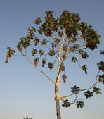 Tree, Bolivia — Stock Photo